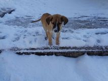 Little puppy watch first snow. Funny little puppy on snow street Stock Image