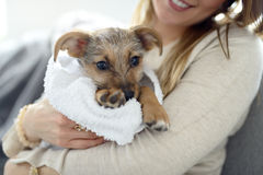 Little puppy wrapped in towel Stock Image