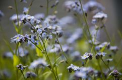 Little purple flowers budding in a meadow stock images