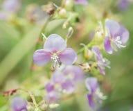 Little purple flowers Stock Image