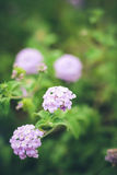 Little Purple Flowers. Tiny lavendar flowers in the green garden stock image