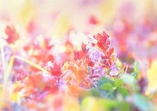 Little purple meadow flower Royalty Free Stock Photo