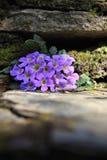 Little purple wild flowers stock photos
