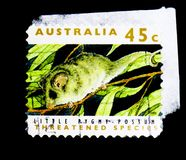 Little Pygmy Possum (Cercartetus lepidus), Threatened Species se. MOSCOW, RUSSIA - MARCH 28, 2018: A stamp printed in Australia shows Little Pygmy Possum ( royalty free stock photos