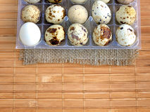 Little quail eggs Royalty Free Stock Image