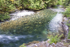 Little Qualicum River Provincial Park Royalty Free Stock Images