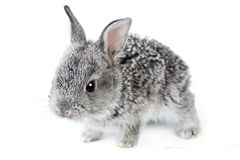 Little rabbit Stock Photo