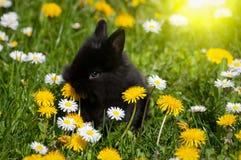 Little rabbit Stock Image