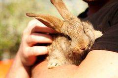 Little rabbit Royalty Free Stock Image