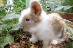 Little Rabbit. Eating flower on a pot stock images