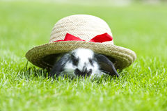 Little rabbit Stock Images