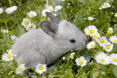A little rabbit Royalty Free Stock Photos