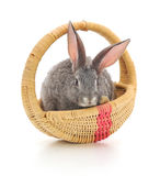 Little rabbit in a basket Stock Image
