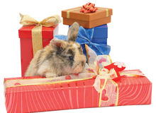 Little rabbit between the boxes with gifts Stock Images