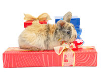 Little rabbit on the boxes with gifts Stock Image