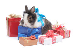 Little rabbit between the boxes with gifts Stock Photography