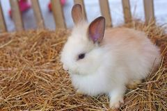 Little rabbit in the cage Stock Images