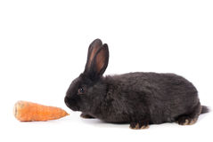 Little rabbit with carrot Stock Photos