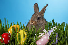 Little rabbit and easter eggs Stock Images