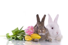 Little rabbit and flowers Stock Photo