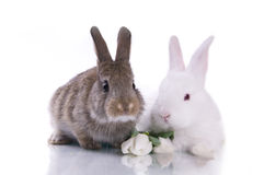 Little rabbit and flowers Stock Photography