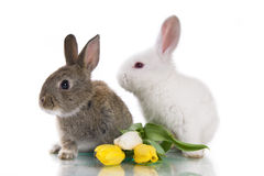 Little rabbit and flowers Stock Photos
