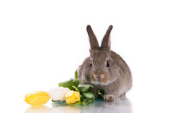 Little rabbit and flowers Royalty Free Stock Images