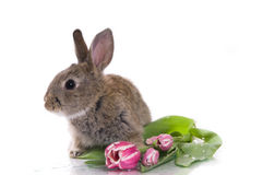 Little rabbit and flowers Royalty Free Stock Photography