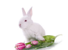 Little rabbit and flowers Royalty Free Stock Image