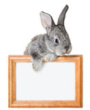 Little rabbit with frame Stock Images