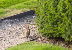 Little rabbit. In the garden of Paris Royalty Free Stock Image