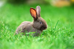 Little rabbit in grass Stock Photo