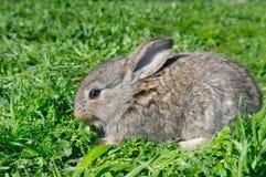 Little rabbit and  green grass Stock Photos