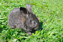 Little rabbit on green grass Stock Images
