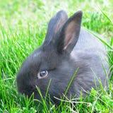 Little rabbit on green grass Royalty Free Stock Photos