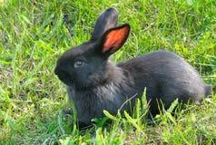Little rabbit on green grass Stock Images