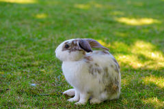 Little rabbit on green grass background. Stock Photography