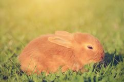Little rabbit on green grass Royalty Free Stock Photo