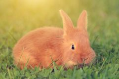 Little rabbit on green grass Stock Photography