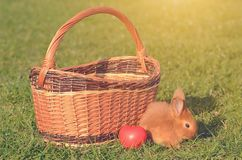 Little rabbit on green grass Royalty Free Stock Photography