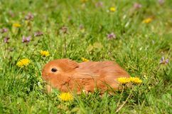 Little rabbit on green grass Stock Image