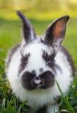 Little rabbit on green grass Royalty Free Stock Photo