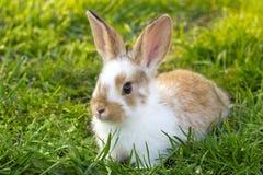 Little rabbit on green grass Stock Photography
