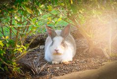 Little rabbit on green grass. Stock Photos