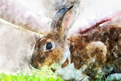 Little rabbit on green grass in summer day stock images