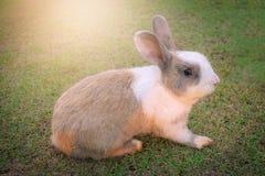 Little rabbit on green grass. Royalty Free Stock Photos
