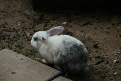Little rabbit stock photography