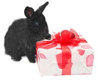 Little rabbit near the box with gift Stock Photos