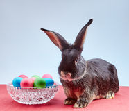 Little rabbit near Easter eggs Stock Photo