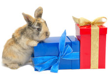 Little Rabbit Near The Boxes With Gifts Stock Photos